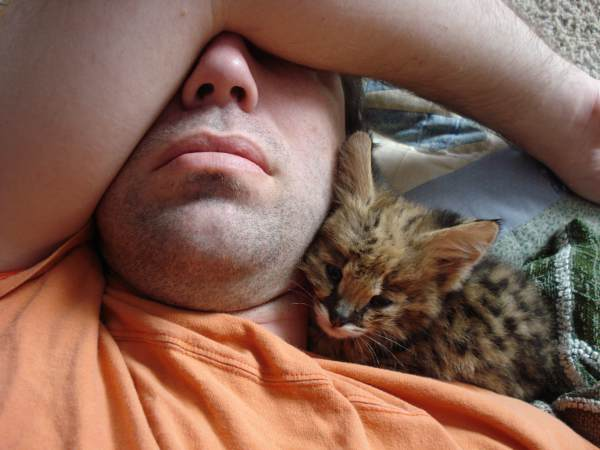 Serval kitten sleeping with me