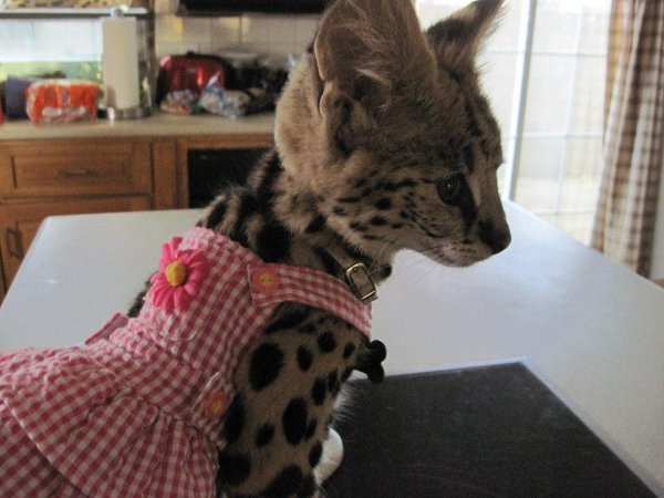 Customers Serval
